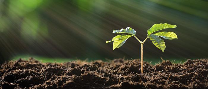 Tree Planting Initiative