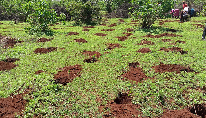 Eden Reforestion Project Kenya 2