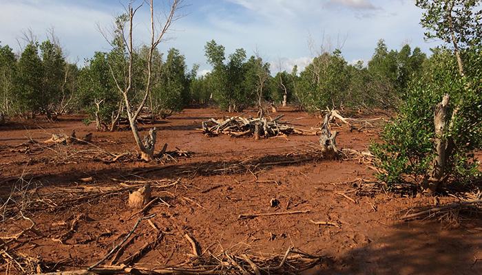 Eden Reforestion Project Madagascar 2